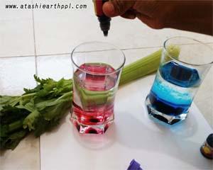 水に色をつける