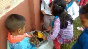 自由研究 鉢植え 土を入れる